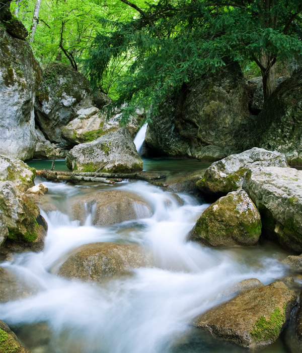 Wooded river flowing over rocks